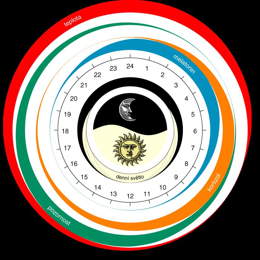 cirkadianni-rytmus
