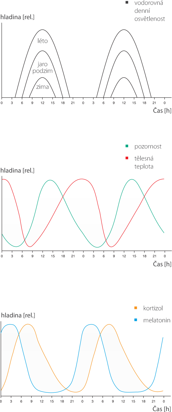 cirkadianni-cyklus